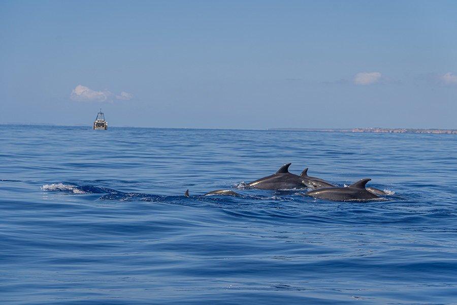 delfine beobachtung cala dor