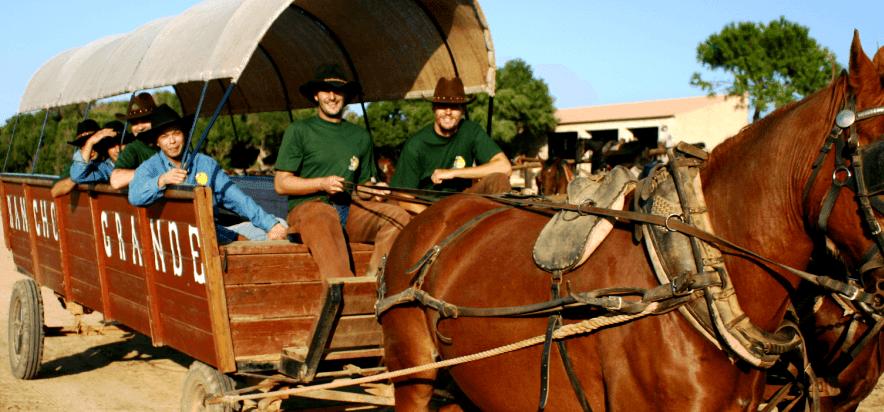 Pferde, Rach, Waggon