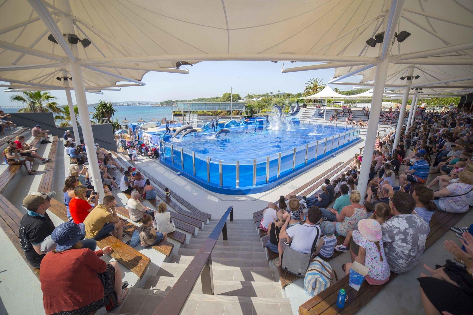 arena von delfin show