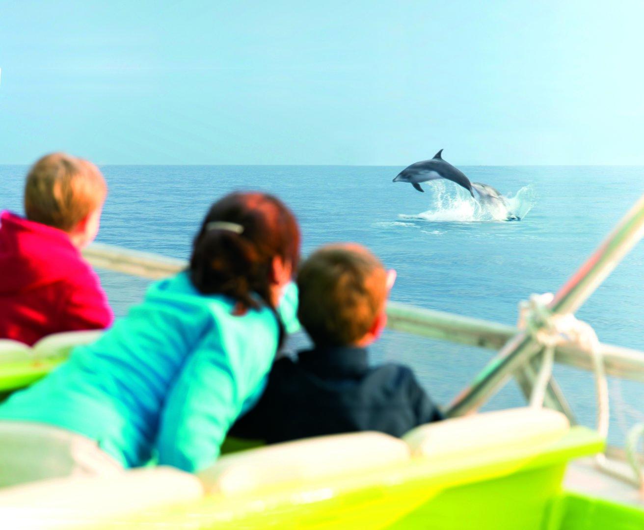 delfines en alcudia