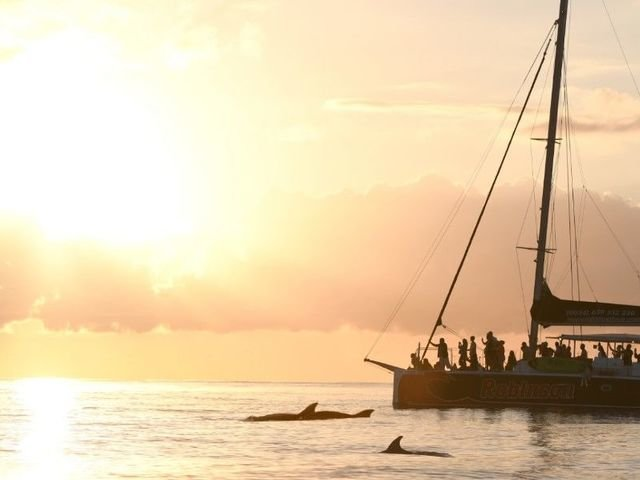 Excursions,tours and things to do in 'Catamaran Tours and Boat Excursions in Mallorca'