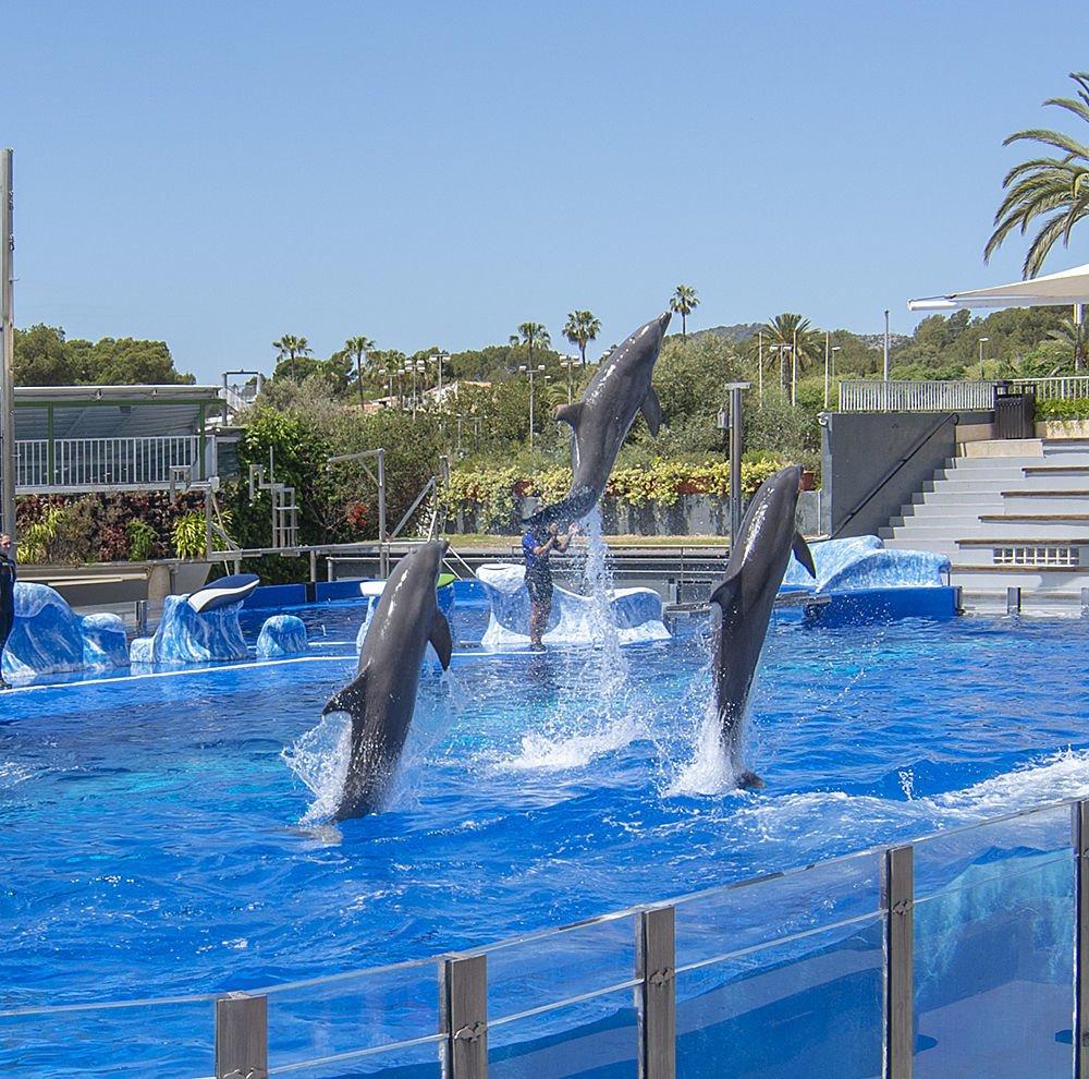 spettacolo dei delfini mallorca